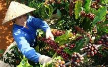 Nhiều rủi ro trong xuất khẩu cà phê