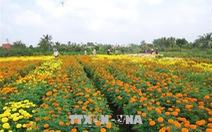 Hơn 10 triệu sản phẩm hoa Tết được đặt hàng