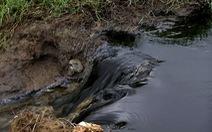 Nước thải đen ngòm từ nhà máy phân vi sinh chảy ra môi trường