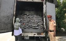 Giữ xe chở 3,5 tấn cá tạp hôi thối ở Đà Nẵng