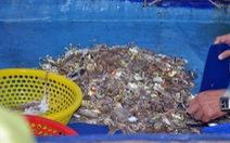 Tận diệt - đến cả trứng cá cũng không thoát