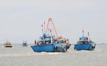 'Mùa cá cơm bây giờ, khai thác vài ngày đã không còn'