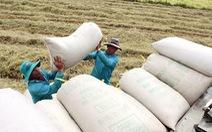 Gạo Việt Nam xuất khẩu trên 20 năm nhưng chưa đạt thương hiệu quốc tế