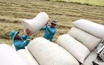 Thủ tướng yêu cầu tăng dự trữ 200.000 tấn gạo để chặn đà giảm giá