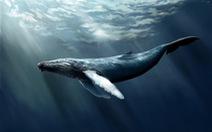 Bạn có biết cá voi từng có... 4 chân?