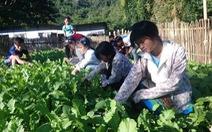 Thầy trò trồng rau, nuôi heo gây quỹ lớp, giúp học sinh nghèo
