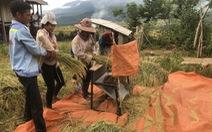 Noong Hẻo hồi sinh sau nạn 'vàng tặc'