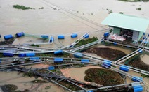 Nước lũ sông Bàn Thạch dâng cao, 40 lồng cá bị cuốn trôi