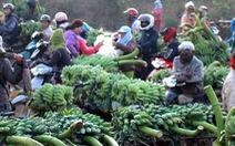 Chuối Tân Long - 'thủ phủ chuối' miền Trung tăng giá mạnh