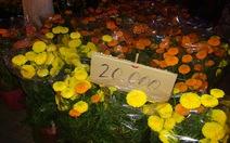 Nhà vườn ở miền Tây lỗ nặng vì hoa kiểng rớt giá thê thảm