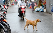 Hà Nội buộc đăng ký với chính quyền khi nuôi chó, mèo