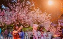 Lễ hội hoa anh đào tại Hà Nội diễn ra từ ngày 23 đến 26-3