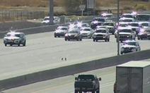 Cả cao tốc dừng xe vì hai chú chó đi lạc