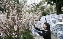 10.000 cành hoa anh đào phục vụ khách tham quan tại Hà Nội