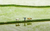 Sứ mệnh cây lúa miền Tây