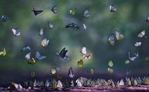 Thung lũng của bướm đêm tại Hy Lạp