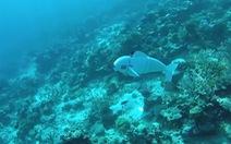 Đại học Mỹ chế robot cá cứu đại dương