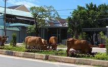 Người đi xe máy tử vong sau khi tông con bò thả rông