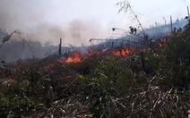 Tranh chấp đất dai dẳng, hàng chục hecta cao su bị đốt phá