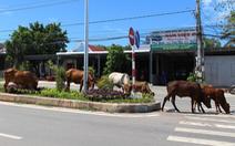 Để bò thả rông gây tai nạn, có thể bị xử lý hình sự?