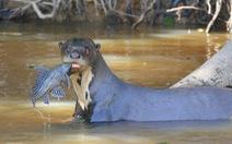 Những động vật bên bờ tuyệt chủng