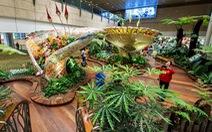 Bên trong sân bay tốt nhất thế giới Changi