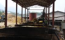 Sông Mã bị hàng loạt cơ sở chế biến lâm sản 'đầu độc'