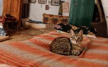 Cuộc sống của các gia đình dưới lòng đất ở Tunisia