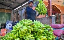 Trung Quốc tăng mua, giá chuối tăng mạnh