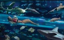 'Dạo chơi' trong bể nước đầy cá mập