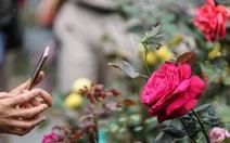 Lễ hội hoa hồng Bulgaria sửa sai, người dân được 'đền bù'