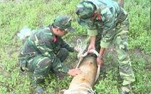 Xử lý thành công quả bom nặng 150kg trong vườn nhà dân