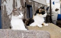 Lãnh thổ của những chú mèo hạnh phúc nhất thế giới