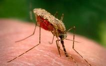 Sốt rét thay đổi mùi của bệnh nhân, làm họ càng 'hấp dẫn' muỗi