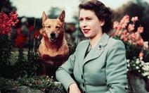 Chú chó cuối cùng hoàng gia Anh được nhận cái chết nhân đạo