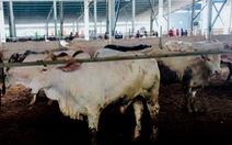 Trang trại bò gây ô nhiễm bị phạt 70 triệu, phải xin lỗi dân