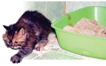 4 điều cần biết về cát vệ sinh mèo