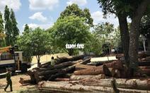 Bộ Công an vào bắt trùm gỗ lậu ở Đắk Nông