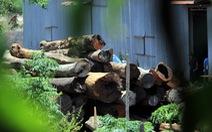 Cả ngàn cây gỗ quý trong kho xưởng của trùm Phượng 'râu'