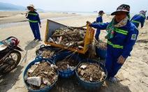 Bãi biển Đà Nẵng ngập rác sau mưa lớn