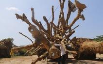 3 cây siêu khủng': hồ sơ đủ nhưng chưa rõ nguồn
