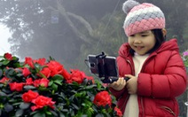 Sun World Fansipan Legend rực rỡ sắc màu hoa đỗ quyên
