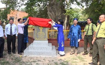 An Giang: 3 cây bằng lăng hơn 300 tuổi thành Cây di sản Việt Nam