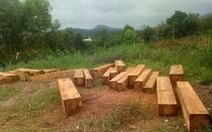 Điều tra đoàn xe độ chở gỗ lậu ra khỏi rừng