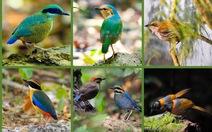 Khi Asean, Nhật, Hàn Quốc cùng bảo vệ chim hoang dã