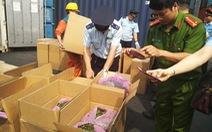 Lại phát hiện 2,5 tấn lá Khát tại cảng Hải Phòng