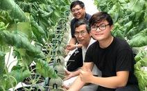 Nhà vườn trồng dưa lưới Nhật Bản của ông chủ 9x