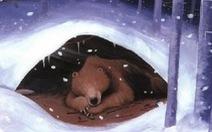 Loài vật có thể đẻ con khi ngủ đông?
