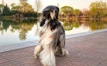 Con chó 'phong cách' nhất thế giới là đây!