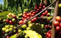 Truyền thông Đức ngạc nhiên về 'cuộc cách mạng cà phê' ở Việt Nam